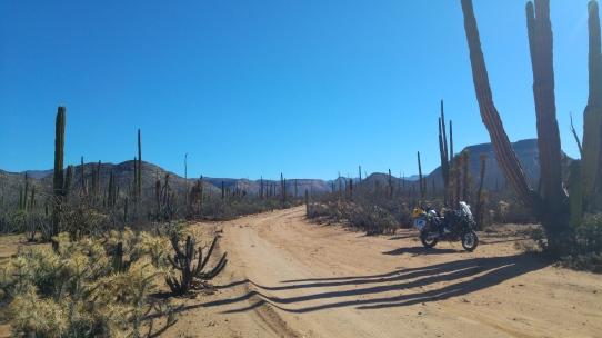 The Baja Roads!
