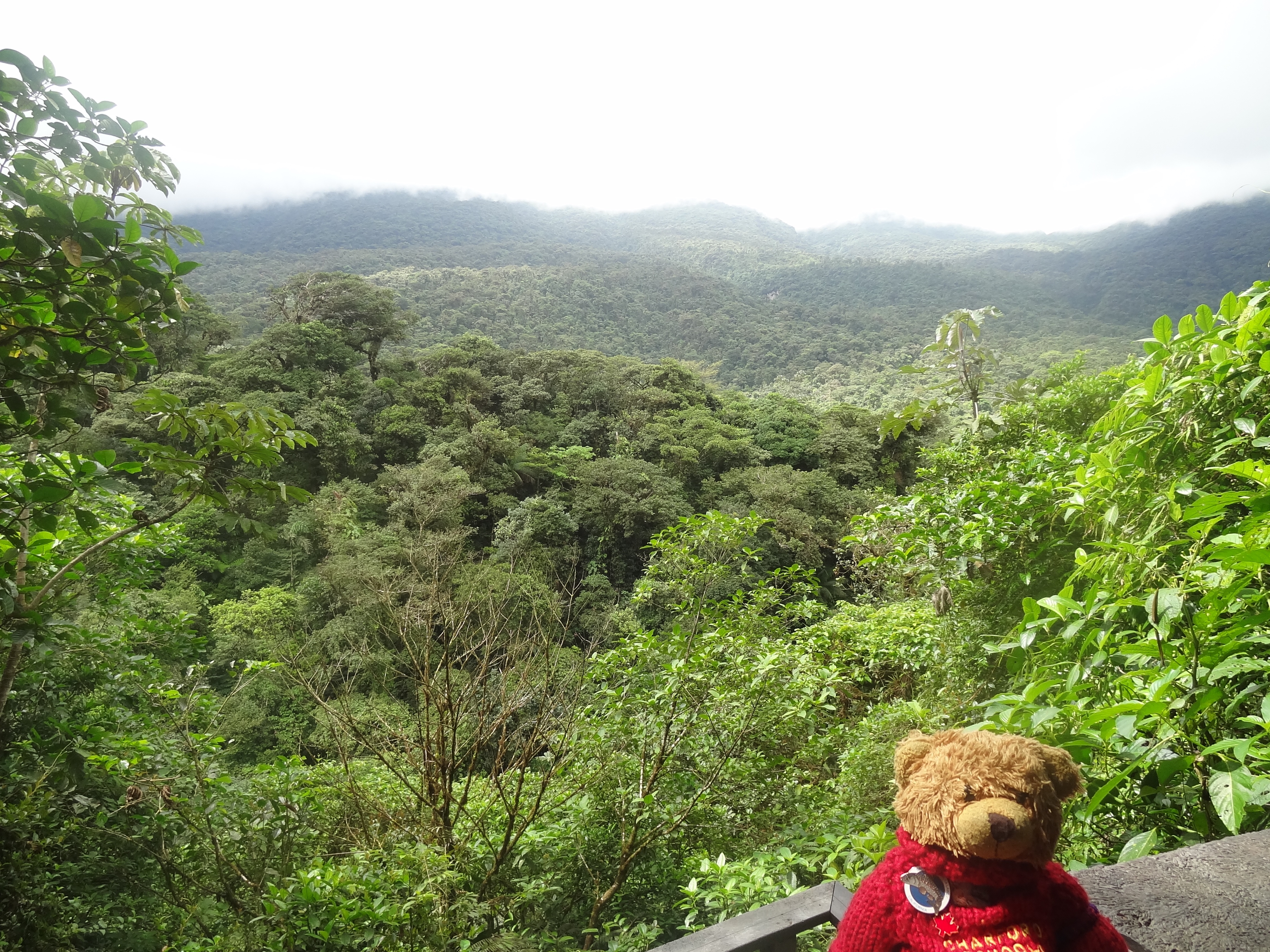 There is an upper canopy of trees that are between 60 and 130 feet high. This is where most of the animals live. Then there is the lower canopy of trees 60 ... & Belize u2013 Adventure Freeway.. Alaska to Argentina